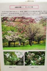 hananokai160416-146.jpg