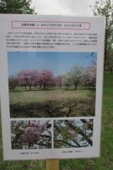 hananokai160416-154.jpg