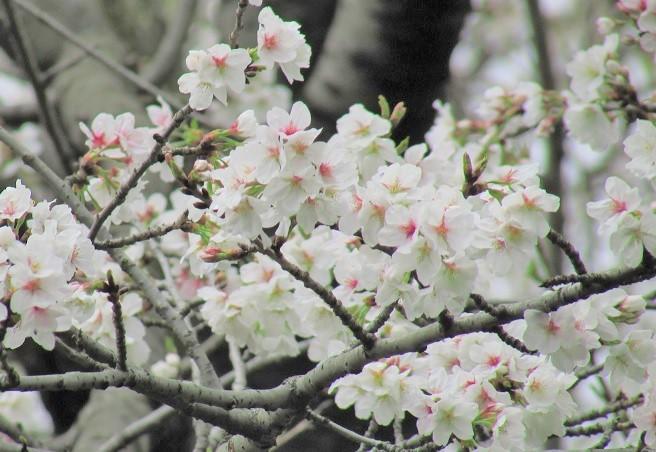 higashigyoen160403-130.jpg