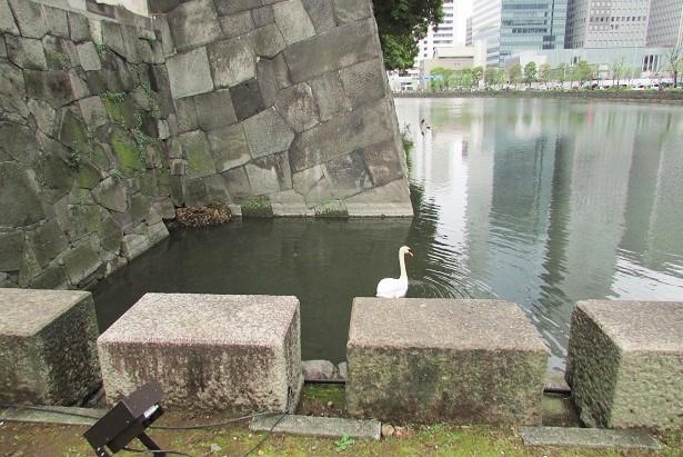 higashigyoen160403-146.jpg