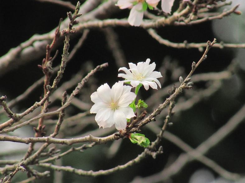 koukyo160917-101.jpg