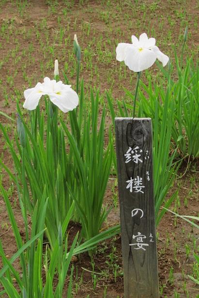 mizumoto160529-130.jpg