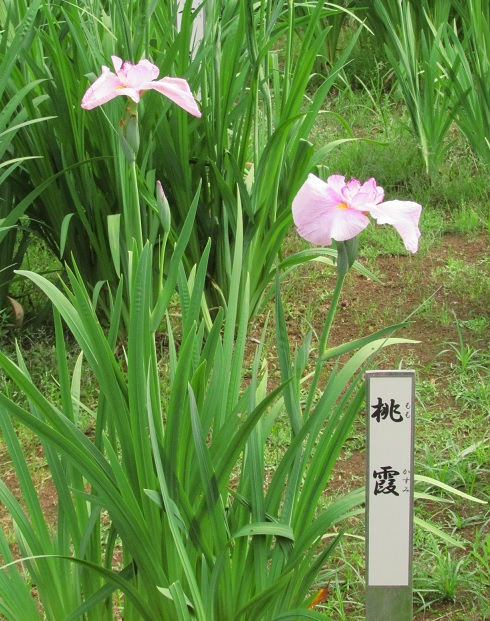 mizumoto160529-137.jpg