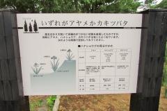 mizumoto160529-147.jpg