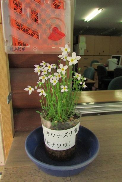 nikko-shokubutuen160504-105.jpg