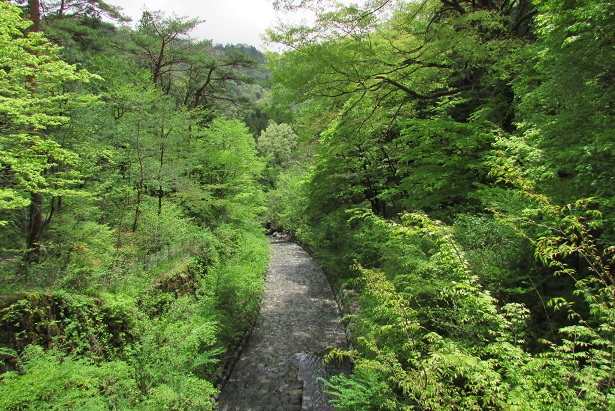 nikko-shokubutuen160504-126.jpg