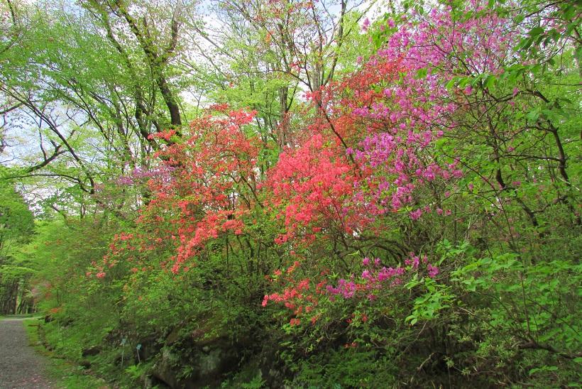 nikko-shokubutuen160504-136.jpg