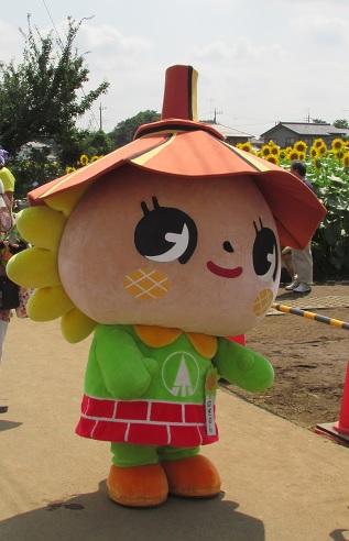 nogi-himawari160724-120.jpg