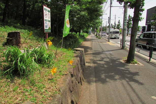 sengenyama-kisuge160507-107.jpg