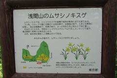 sengenyama-kisuge160507-119.jpg