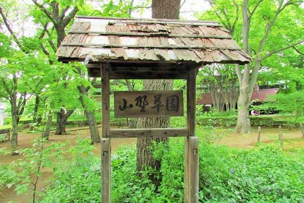 shiminnomori160424-116.jpg