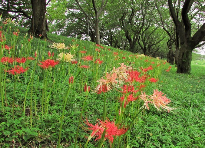 yoshimi160828-113.jpg