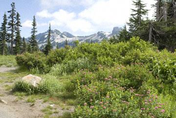 blog TAKE 84, Mt. Rainier, Panako Pache to Longmire junction, Mt. Rainier trail, WA_26081-7.30.07.jpg