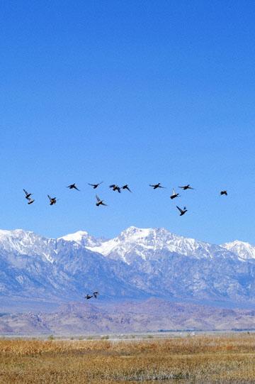 blog 3 Owens Lake, Keeler, Eastern Sierra Nevada 2, CA_DSC5478-4.1.16.(1).jpg