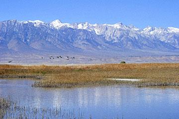 blog 3 Owens Lake, Keeler, Eastern Sierra Nevada, CA_DSC5476-4.1.16.(1).jpg