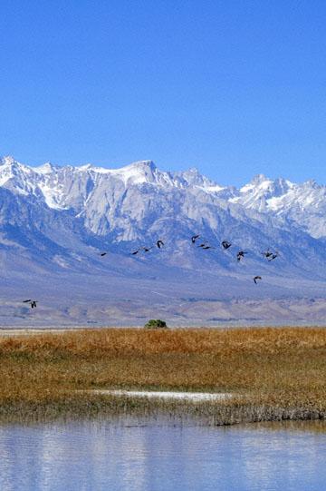 blog 3 Owens Lake, Keeler, Eastern Sierra Nevada 2, CA_DSC5477-4.1.16.(1).jpg