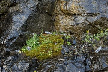 blog TAKE 89 Glacier NP, Apgar to Logan Pass (2,026m) to Sieh Blad, Lunch Creek area, Flower Island, MT_26476-8.1.07.jpg