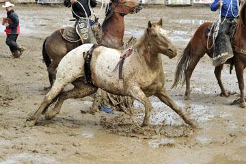 blog 24 D3S Oakdale Rodeo, Bareback Bronco 3_DSC5238-4.10.16.(2).jpg