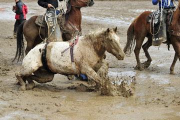 blog 24 D3S Oakdale Rodeo, Bareback Bronco 3_DSC5237-4.10.16.(2).jpg
