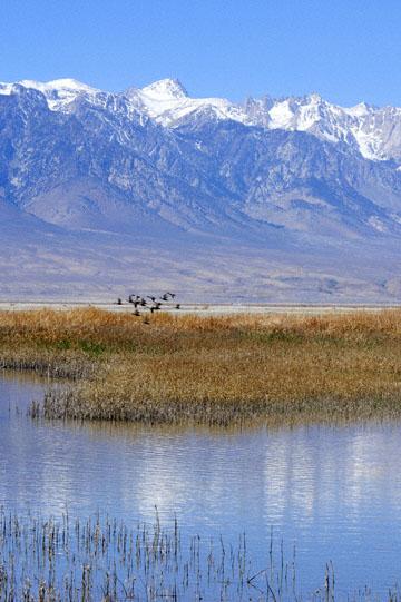 blog 3 Owens Lake, Keeler, Eastern Sierra Nevada 2, CA_DSC5480-4.1.16.(1).jpg