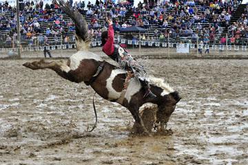 blog 24 D3S Oakdale Rodeo, Bareback Bronco 4_DSC5257-4.10.16.(2).jpg