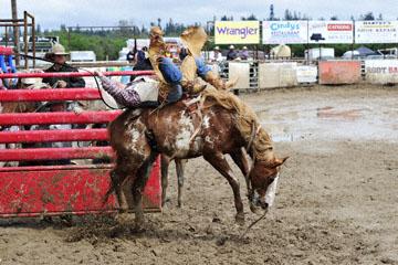 blog 24 D3S Oakdale Rodeo, Bareback Bronco 5, Tyler Nelson (81.5 Victor, ID)_DSC5279-4.10.16.(2).jpg