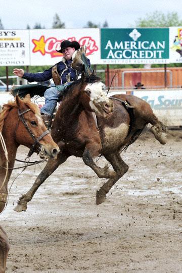 blog 24 D3S Oakdale Rodeo, Bareback Bronco 6, Kyle Bowers (69 Drayton Valley, AB) 2_DSC5319-4.10.16.(2).jpg