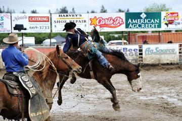 blog 24 D3S Oakdale Rodeo, Bareback Bronco 6, Kyle Bowers (69 Drayton Valley, AB) 2_DSC5314-4.10.16.(2).jpg