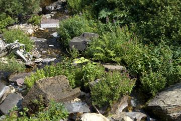 blog TAKE 90 Waterton Lakes NP, Lower Rowe Lake, Rock garden, Canada_26549-8.2.07.jpg