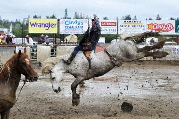 blog 24 D3S Oakdale Rodeo, Bareback Bronco 7, Tucker Zingg (84 Glendive, MT) 2_DSC5344-4.10.16.(2).jpg