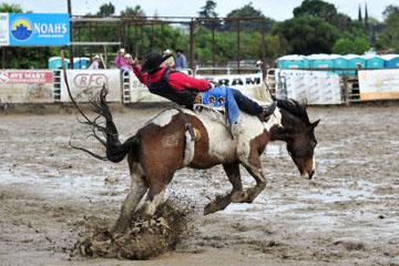 blog 24 D3S Oakdale Rodeo, Bareback Bronco 8, Colin Adams (78 Deloraine, MB) 2_DSC5364-4.10.16.(2).jpg