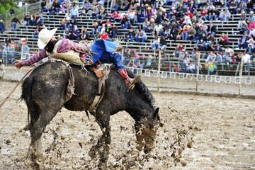blog 24 D3S Oakdale Rodeo, Bareback Bronco 10, Tray Chambliss III (74 Fort Davis, TX)_DSC5391-4.10.16.(2).jpg