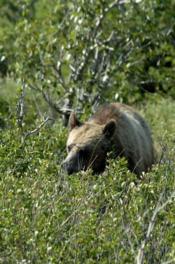blog TAKE 92 Canada, Bear, Waterton NP, Cameron Lake 2_26748-8.2.07.jpg