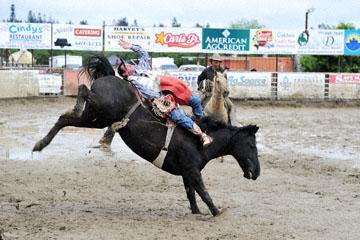 blog 24 D3S Oakdale Rodeo, Bareback Bronco 12, George R. Gillespie (73 Hamilton, MT)_DSC5425-4.10.16.(2).jpg