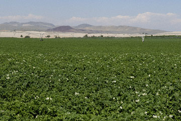 blog TAKE 93 To Yellowstone, 89S, Potato Field near Dunes 26910-8.4.07.jpg