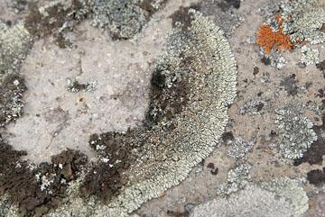 blog TAKE 94 Yellowstone NP, Firehole Lake, Lichen_27034-8.4.07.jpg