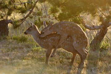 blog 135 Mendocino, Twin Deer babies, CA_DSC4821-6.24.16.jpg