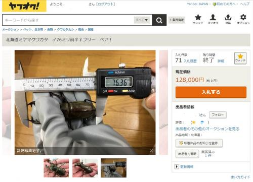 ヤフオク道産ミヤマ76mm