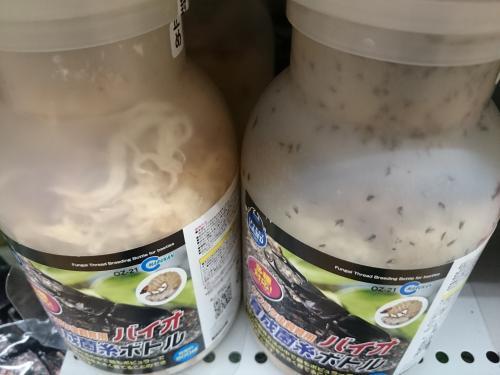 フジコン菌糸ビン