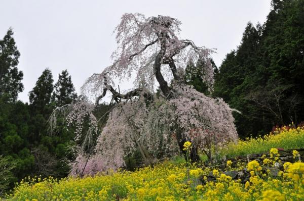 6中津西村大師堂16.04.08