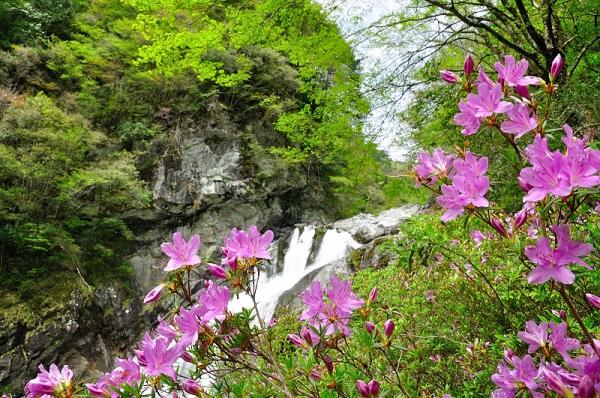3アメガエリの滝16.04.23