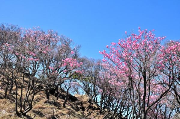 1篠山16.04.29