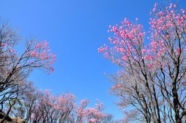 2篠山16.04.29