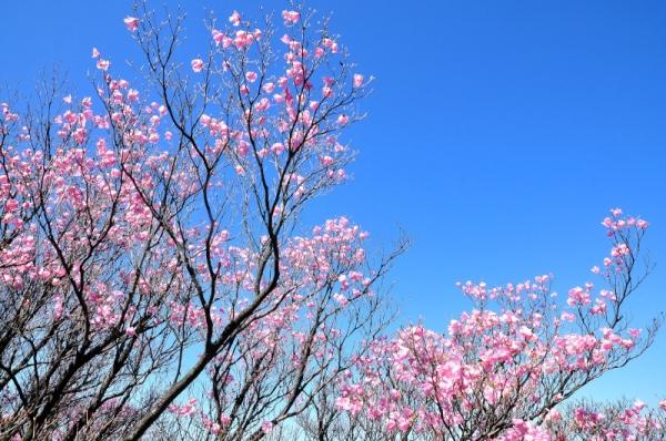 3篠山16.04.29