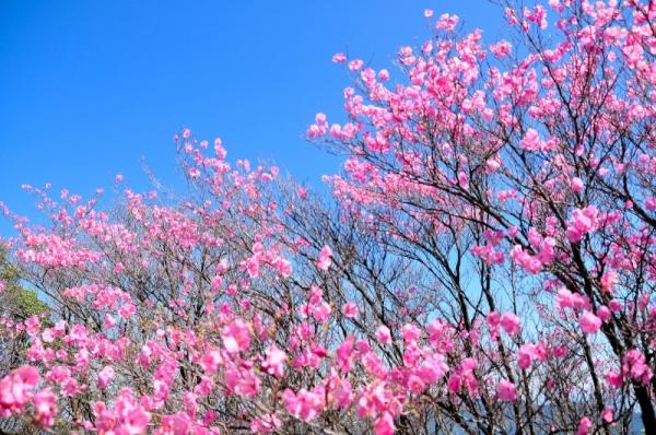 4篠山16.04.29