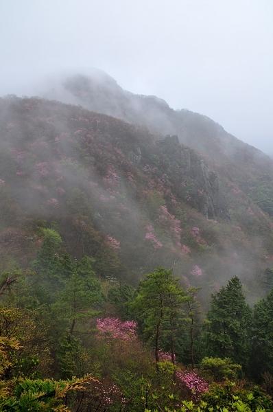 2西赤石山アケボノ16.05.07