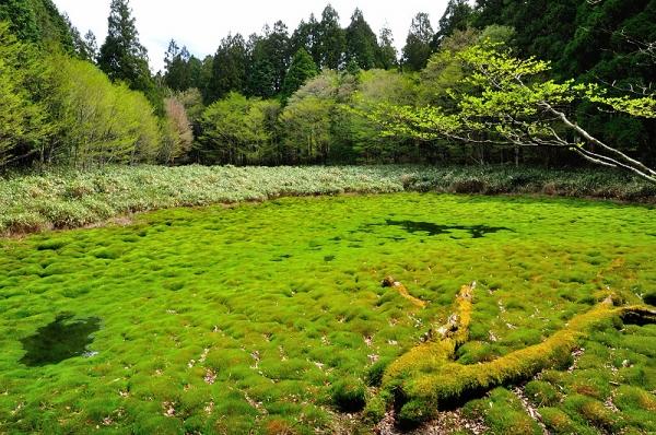 1笹蔵湿原16.05.08