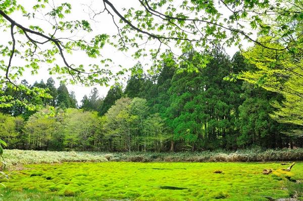 3笹蔵湿原16.05.08
