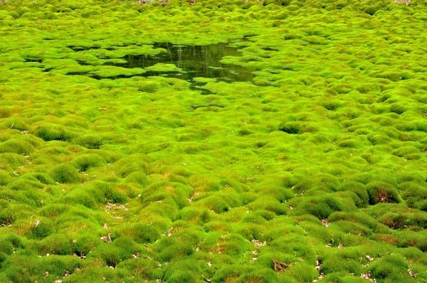 4笹蔵湿原16.05.08