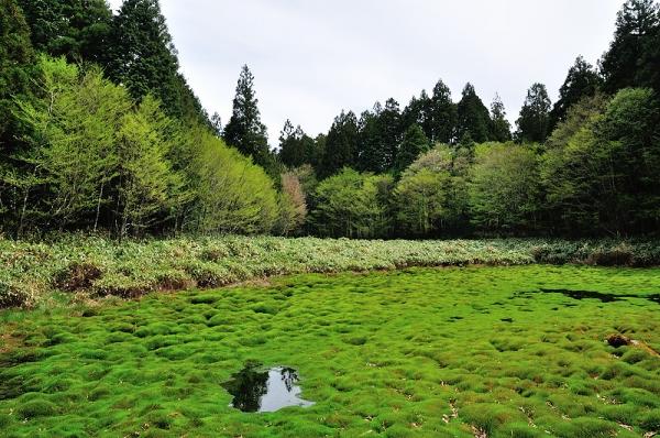 5笹蔵湿原16.05.08